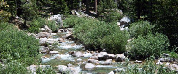 John Muir, quotations, nature, beauty, trees, field studies, field trip, curriculum